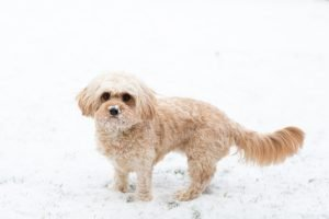 betsy's first snow-1